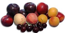 plodowe_250